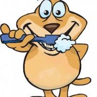tanden poetsen van mijn hond