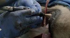 tandarts voor dieren